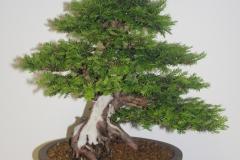 Esposizione-bonsai-Le-rocce-e-lacqua